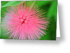 Pink Spikes Greeting Card