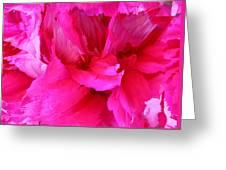 Pink Splash Greeting Card by Kristin Elmquist
