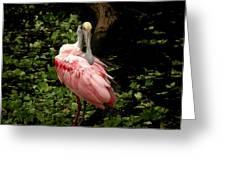 Pink Spoonbill Greeting Card