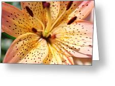 Pink Spotted Lilly Greeting Card