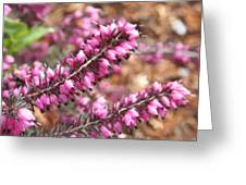 Pink Spray Of Flowers Greeting Card