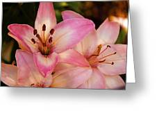 Pink Spring Lilly Greeting Card