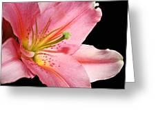 Pink Stargazer Greeting Card