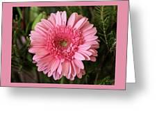 Pink Stunner Greeting Card
