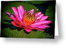 Pink Summer Water Lily Greeting Card