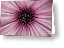 Pink Sun. Greeting Card