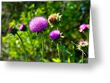 Pink Thistle Study 1 Greeting Card
