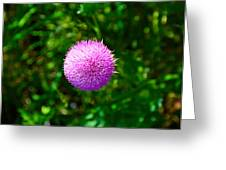 Pink Thistle Study 2 Greeting Card