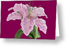 Pink Tiger Lily Blossom Greeting Card