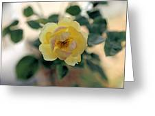 Pink Tipped Yellow Rose Greeting Card