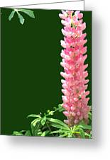 Pink Tower Greeting Card