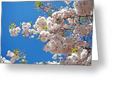 Pink Tree Blossoms Art Prints 55 Spring Flowers Blue Sky Landscape  Greeting Card