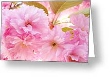Pink Tree Blossoms Art Prints Spring Blossoms Baslee Troutman Greeting Card
