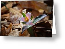 Pink Trillium In Lost Valley Greeting Card