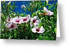 Pink Trumpet Flowers In Pilgrim Place In Claremont-california Greeting Card