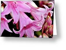 Pink Trumpet Lilies Greeting Card