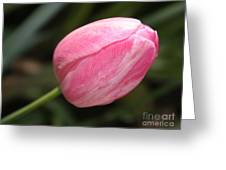 Pink Tulip Closeup Greeting Card