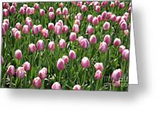 Pink Tulip Field Greeting Card