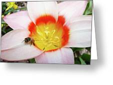 Pink Tulip Flower Orange Art Prints Honey Bee Baslee Troutman Greeting Card