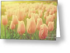 Pink Tulip Flowers In The Garden On Sunny Day In Spring Greeting Card