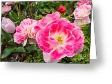 Pink Tulip, Keukenhof Greeting Card