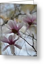Pink Tulip Magnolias Greeting Card