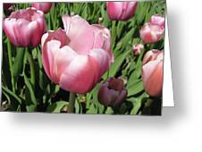 Pink Tulip Greeting Card by Richard Mitchell