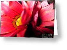 Pink Twin Daisies Greeting Card