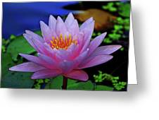Pink Water Lily 007 Greeting Card