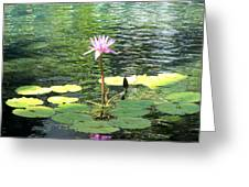 Pink Water Lily Pad Greeting Card