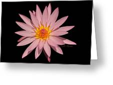 Pink Water Lily Transparent Greeting Card
