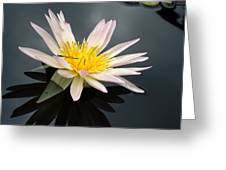 Pink Water Lily With Dragonfly Greeting Card