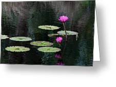 Pink Waterlillies Greeting Card