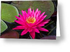 Pink Waterlily Garden Greeting Card