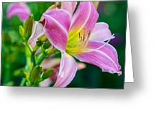 Pink White And Yellow Day Lily Greeting Card