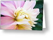 Pink White Dahlia Flower Soft Pastels Art Print Canvas Baslee Troutman Greeting Card