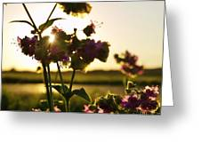Pink Wildflower Sunset I Greeting Card