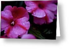 Pink Wonders Greeting Card