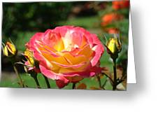 Pink Yellow Roses 3 Summer Rose Garden Giclee Art Prints Baslee Troutman Greeting Card
