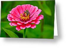 Pink Zinnia Bee Greeting Card