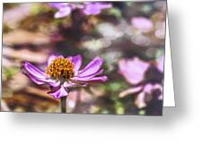 Pink Zinnia Bokeh Greeting Card