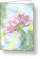 Pink Zinnia On Bokeh Background Greeting Card