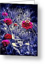 Pink Zinnia's Against A Silver Background Greeting Card