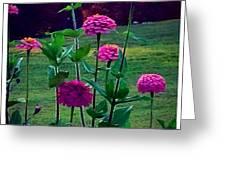 Pink Zinnia's Greeting Card