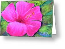 Pinkhawaii Hibiscus #505 Greeting Card