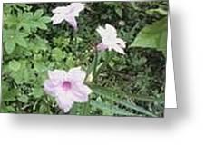 Pinkies Greeting Card