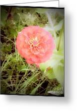 Pinkish Orange Zinnia On Green Background Greeting Card
