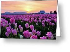 Pinks At Sunset Greeting Card