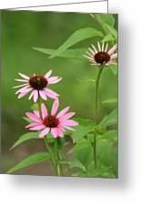 Pinks In Bloom Greeting Card