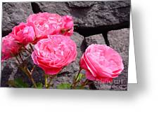 Pinks On The Rocks Greeting Card